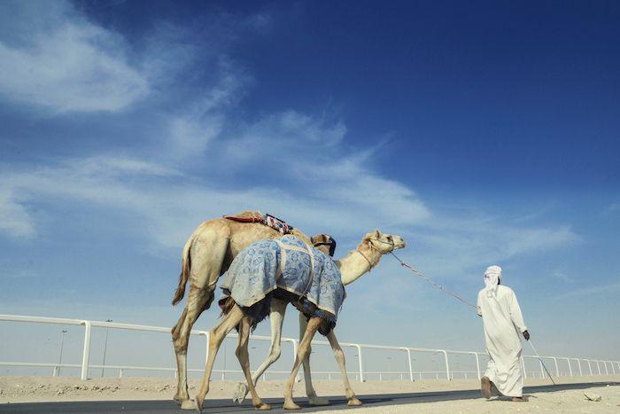 Al Shahaniya Camel Race Track