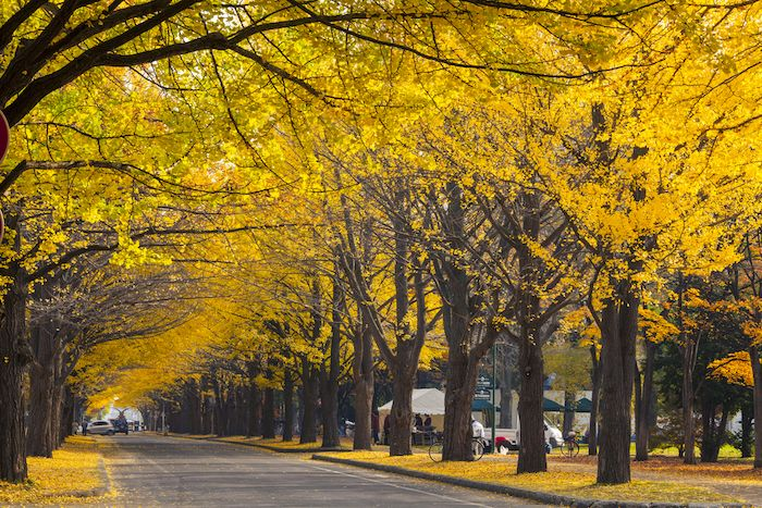 Hokkaido University, Kita