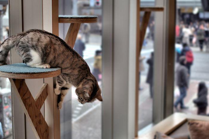 Cat Cafe Shibuya