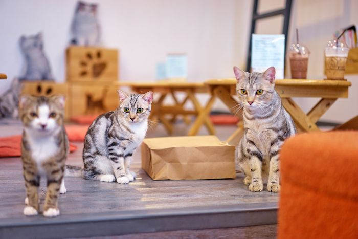 Animal-friendly cafes ikefukuro