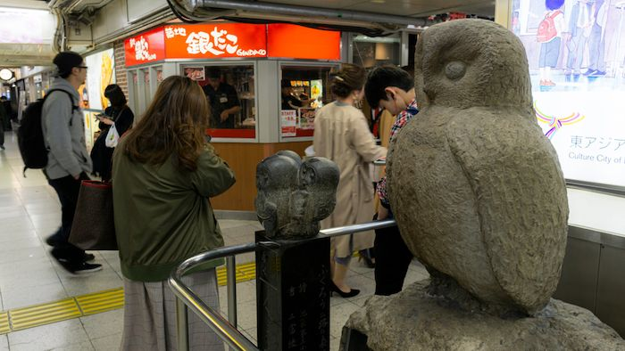 Ikefukurou owls