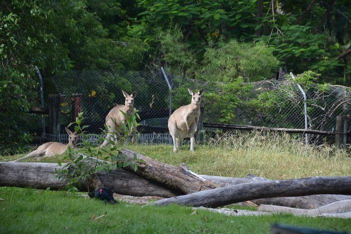 Rockhampton Zoo