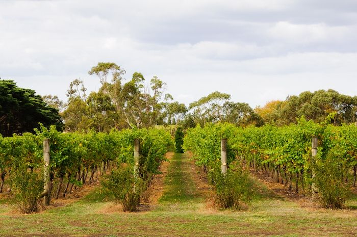 Geelong Wineries