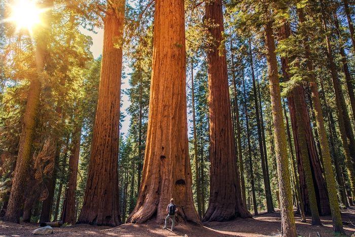 Sequoia Park Forest & Garden