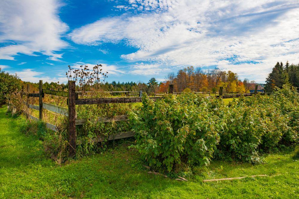 Brattleboro farm