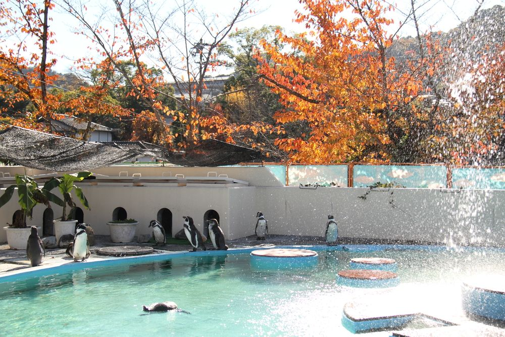 Kyoto City Zoo