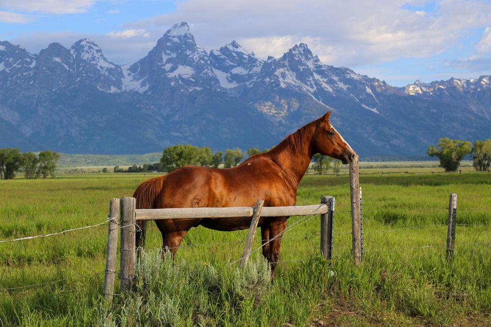 Jackson Hole ranch
