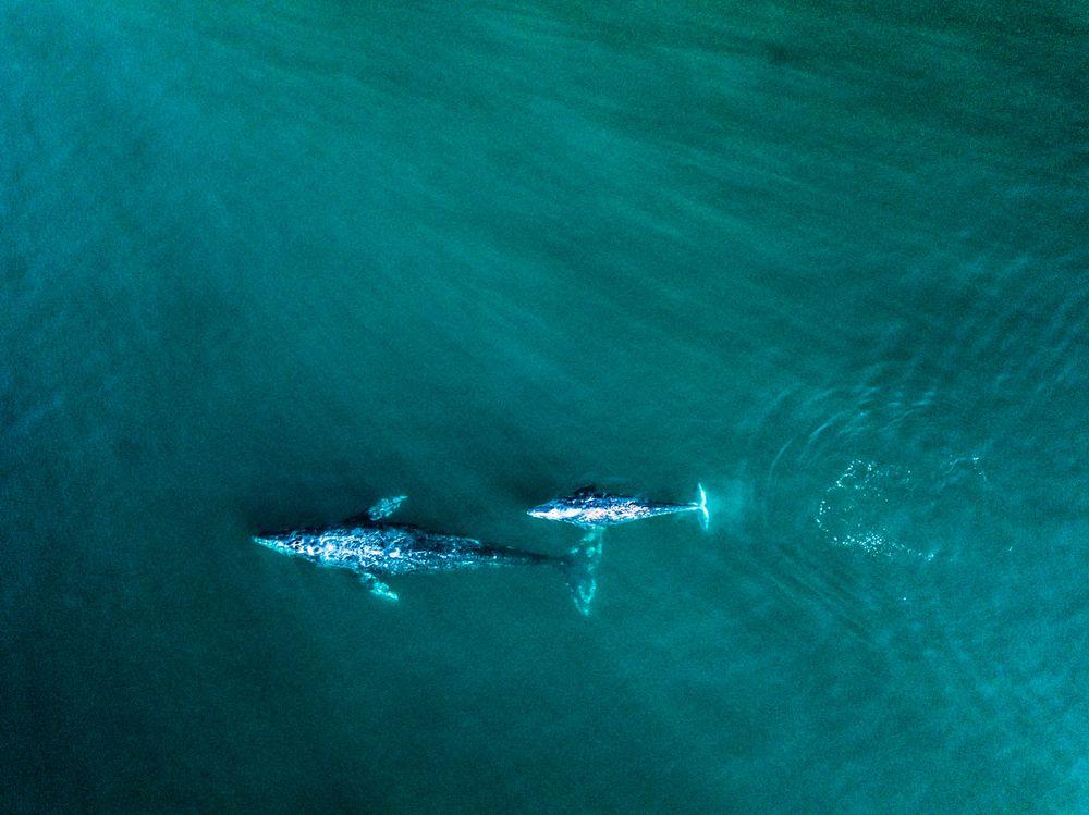 Whale Watching Malibu