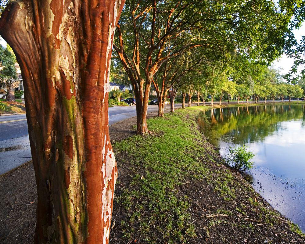 Lake Ella and Fred Drake Park