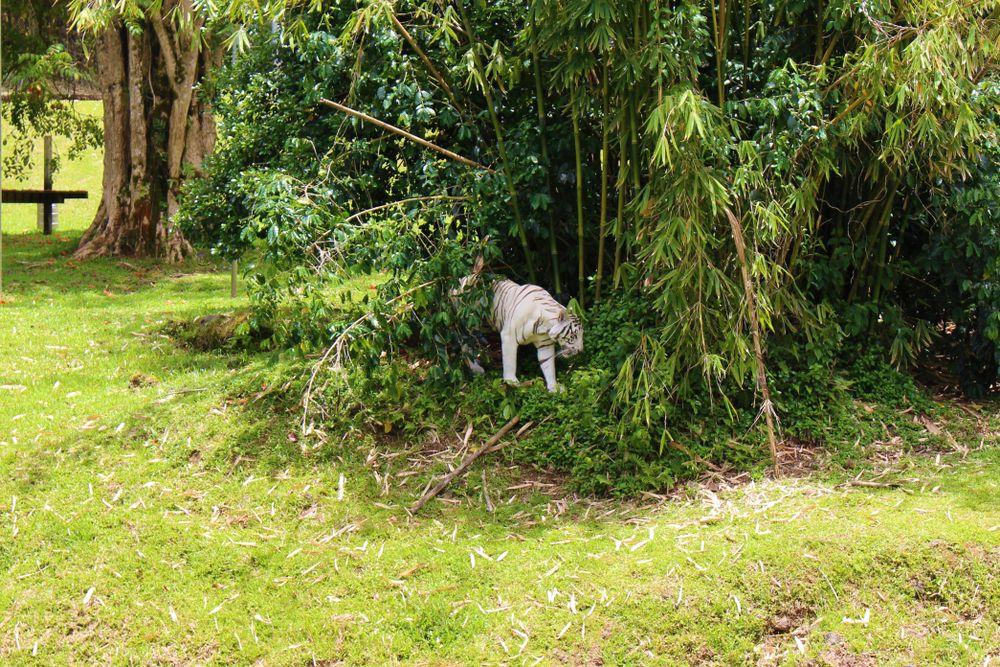 Pana'ewa Rainforest Zoo