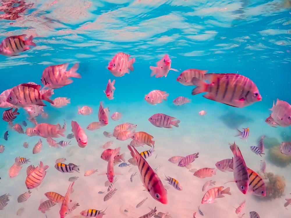 Fishes in Underwater world, Pattaya