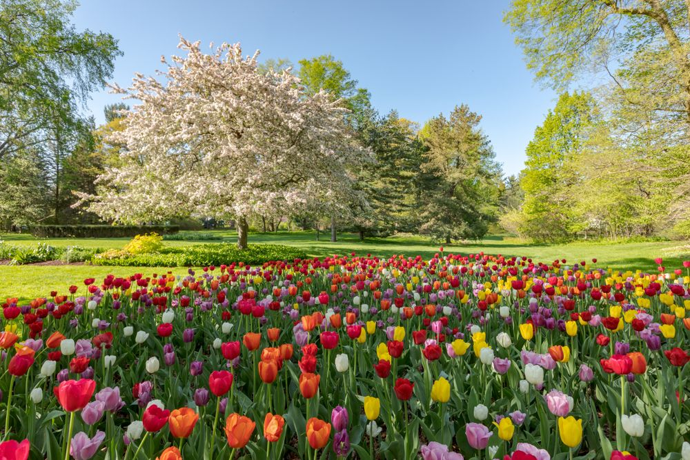 Dow Gardens, Midland, Michigan