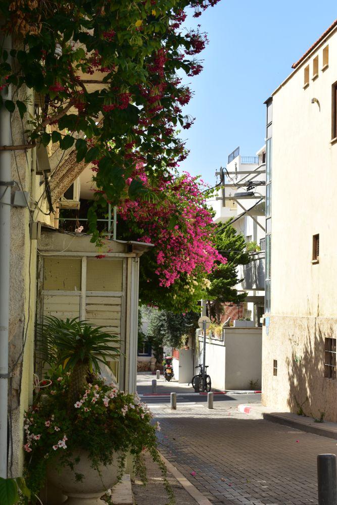 Street in Florentin, Tel Aviv