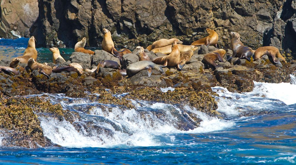 Sea lions at Channel Islands National Park