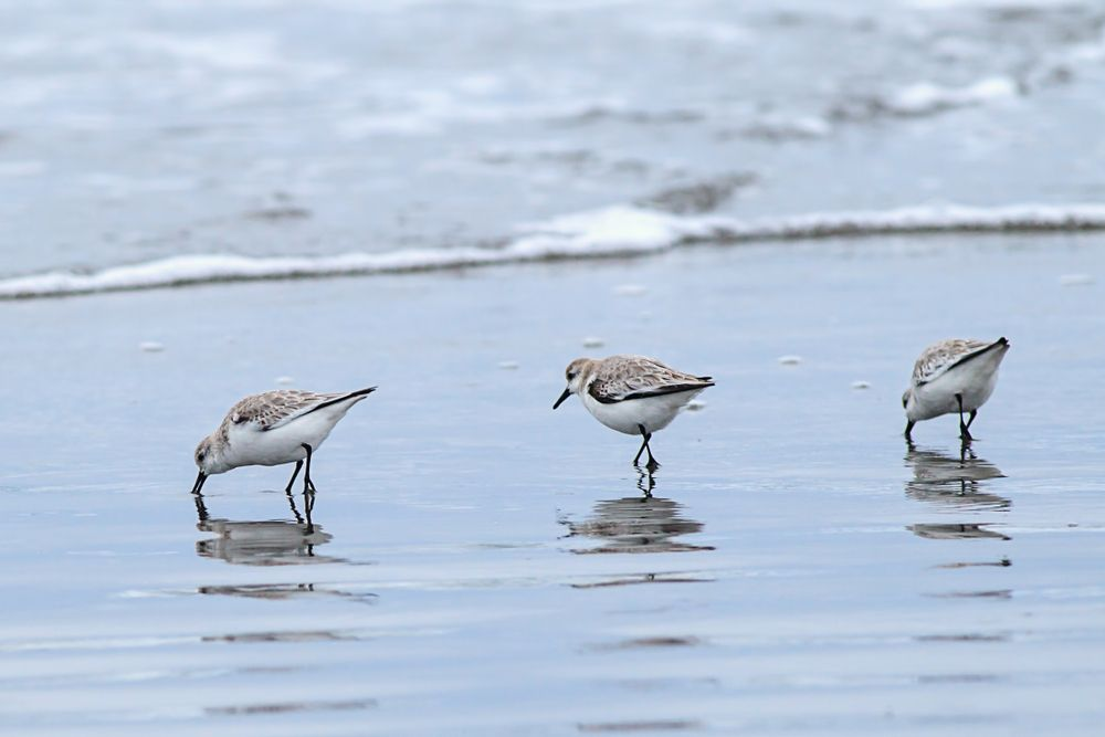 Birds in Del-ray beach