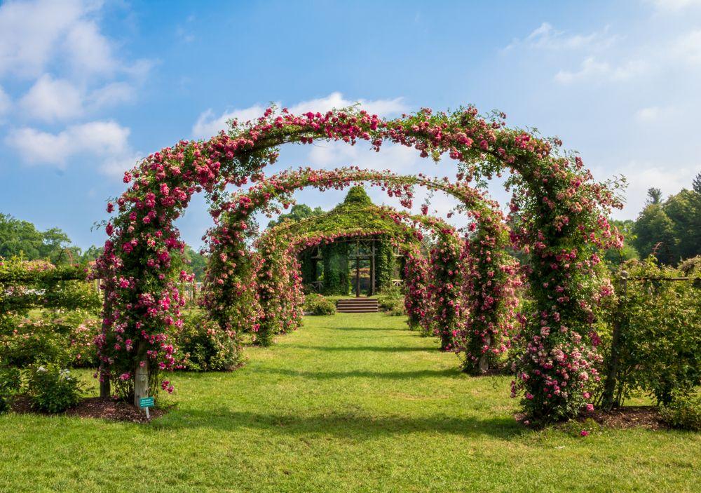 Rose arches at Elizabeth Park in Connecticut