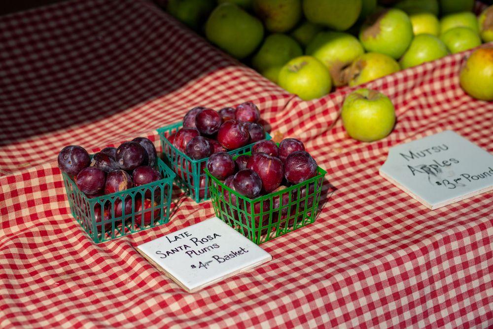 Farmer's market in Santa Rosa