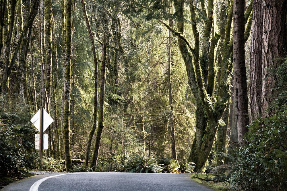 Five Mile Drive