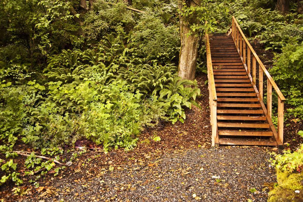 Sehome Hill Arboretum