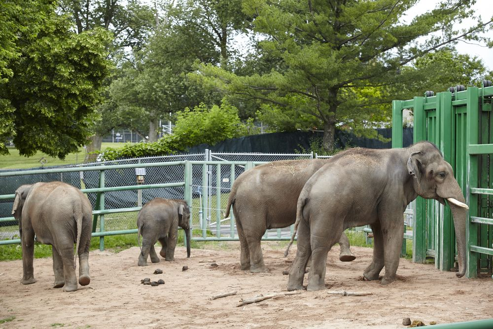 Elephants at Syracuse Zoo