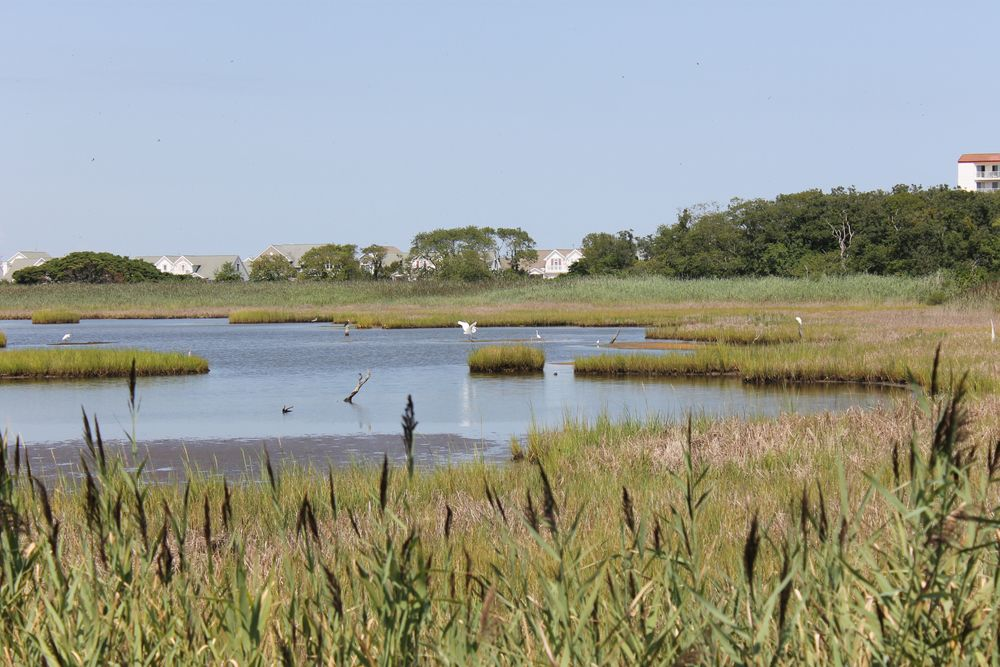 Wildlife refuge in Cape May