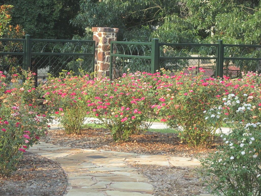 Chamblee's Rose Nursery
