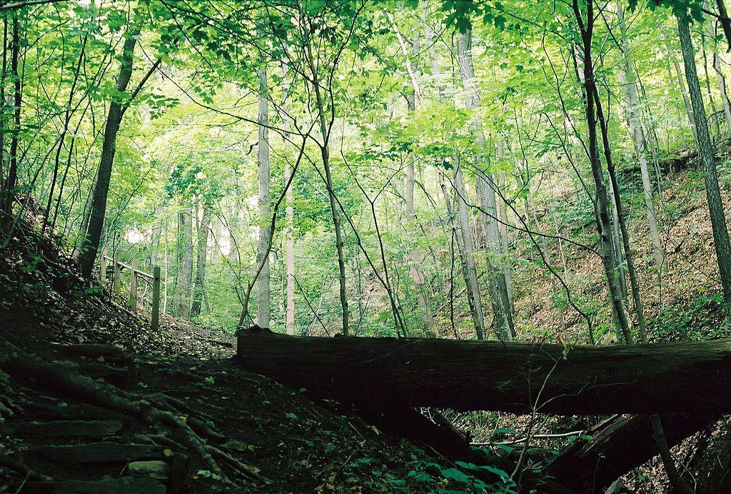 Earl L. Core Arboretum