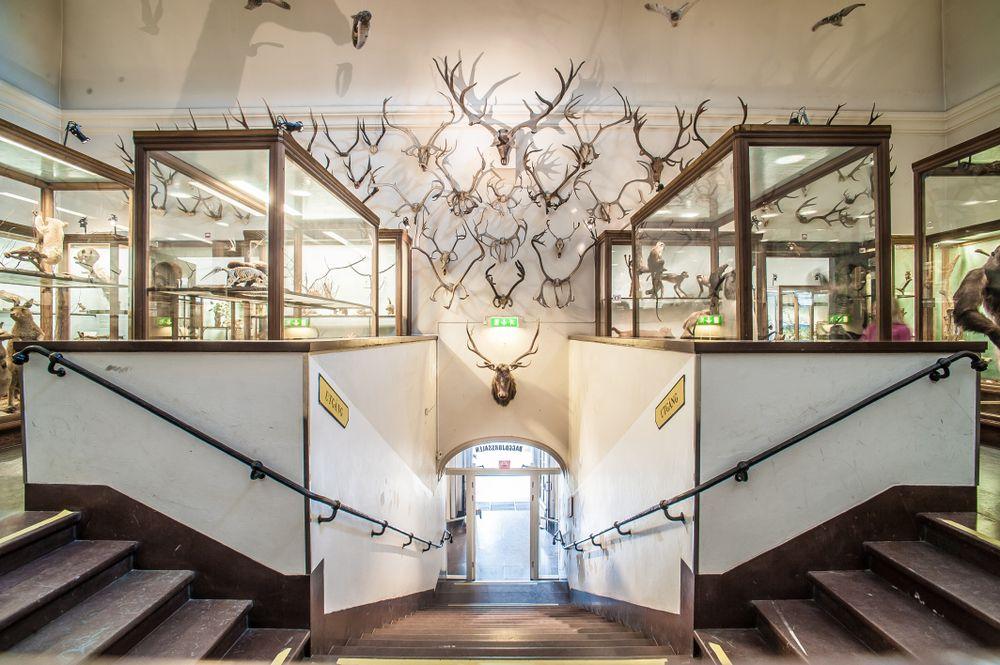 Interior of Gothenburg Natural History Museum