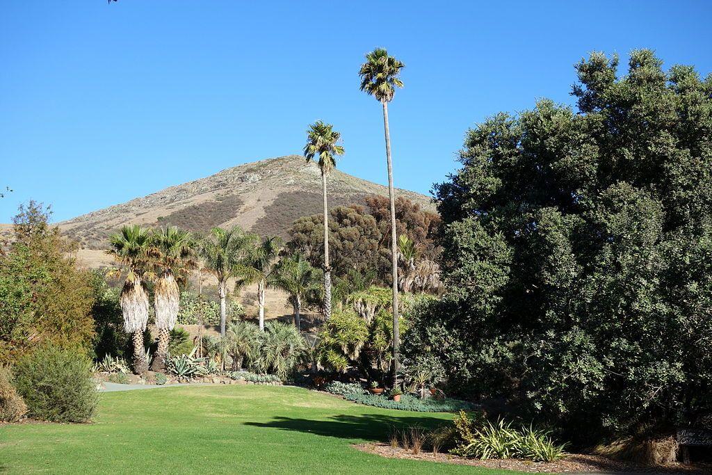 Leaning Pine Arboretum