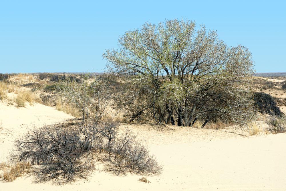Mescalero Sands North Dune