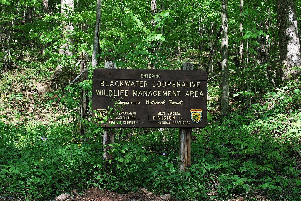 Blackwater Creek Natural Area