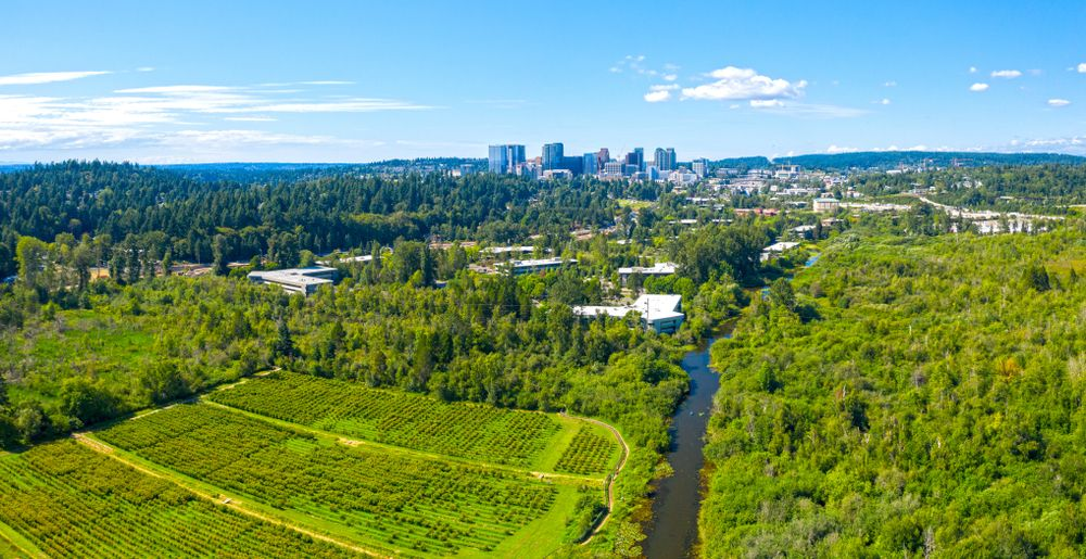 Mercer Slough from above