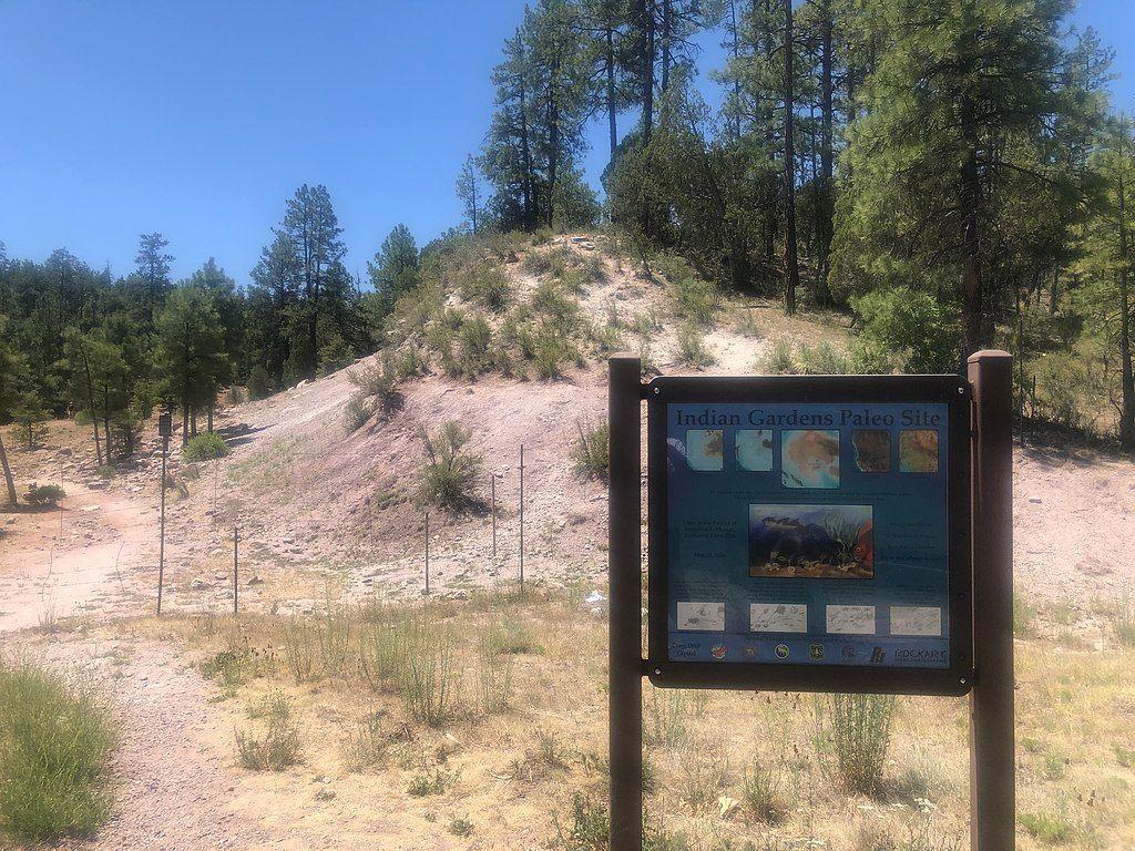 Naco Paleo Site