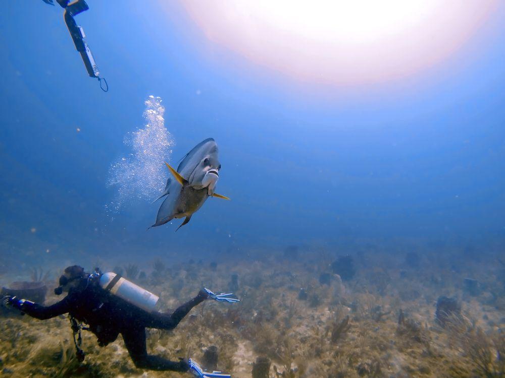 Scuba diving in Pompano beach