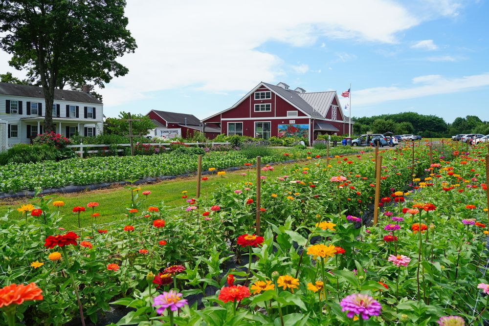 Terhune Orchards and Winery