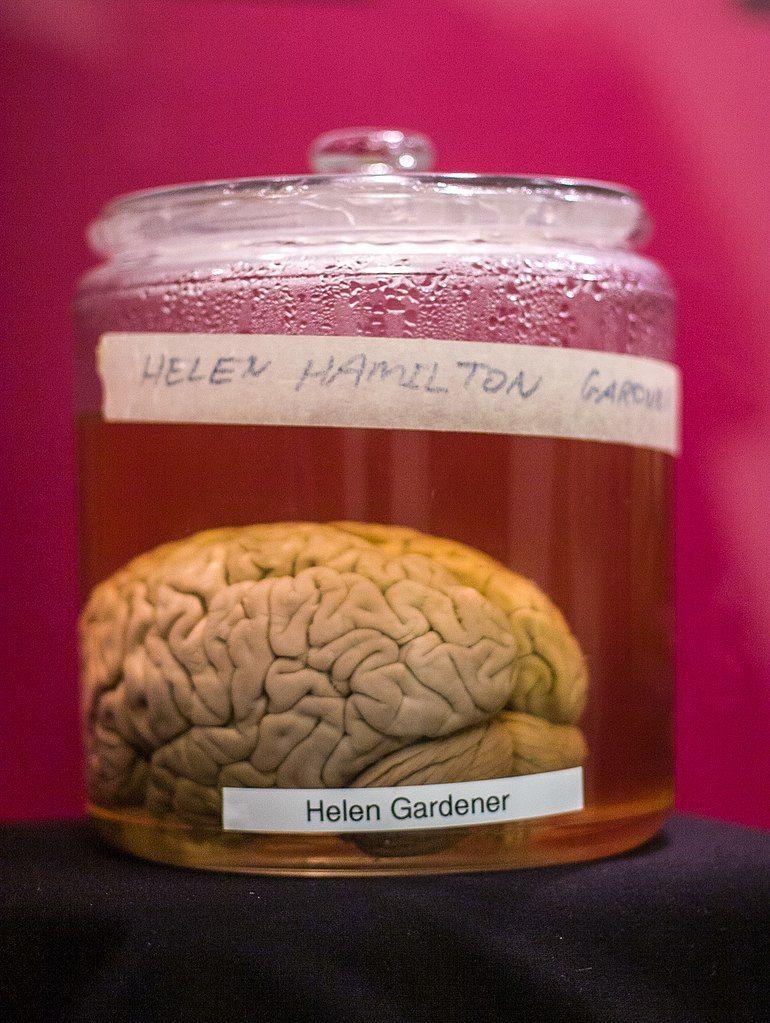 Wilder Brain collection in cornell university