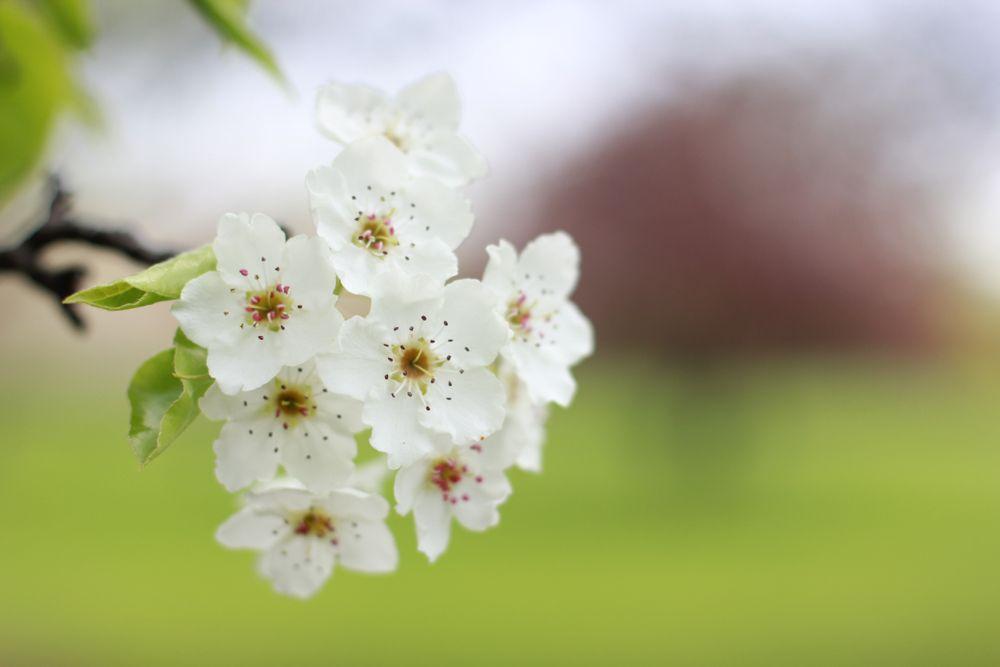 Full bloom at Yakima Area Arboretum