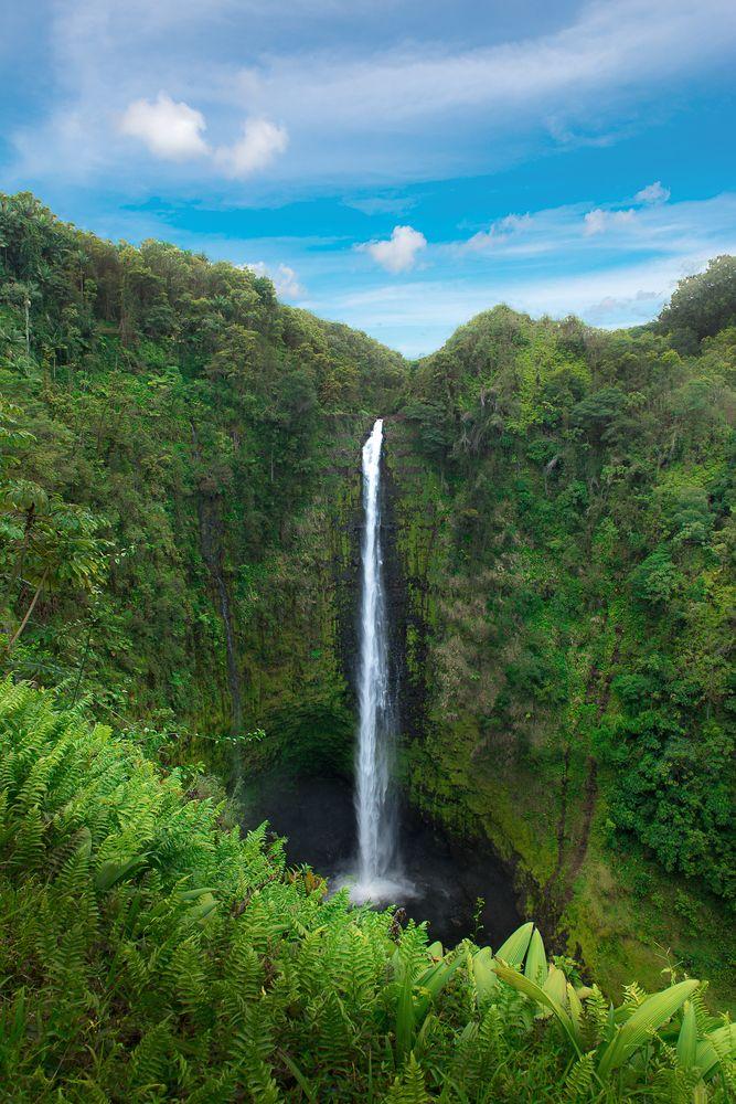 Akaka Falls portrait photo