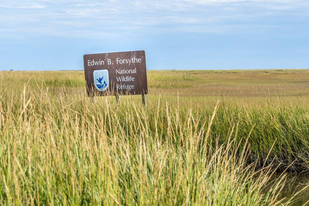 Forsythe National Wildlife Refug