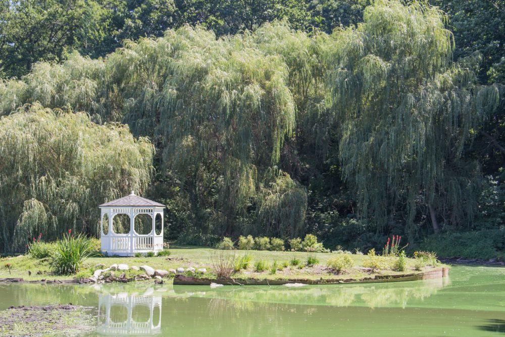 Friendship Botanic Gardens