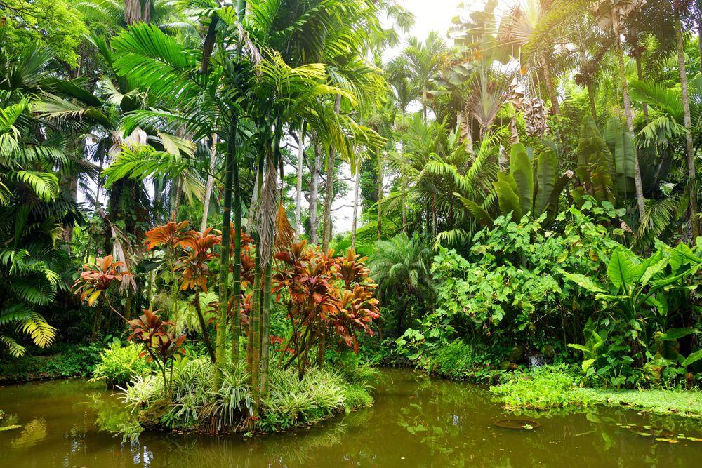 Vegetation in the Hawaii Tropical Botanical Garden