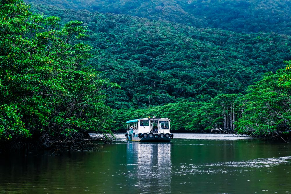 Mangrove forest in Iriomote Island
