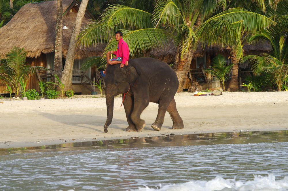 A man riding elephant in Kai Bae Beach
