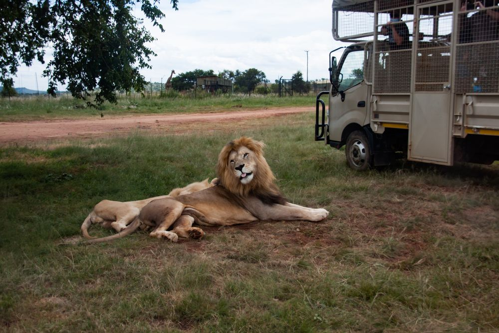 Lion and Safari Park