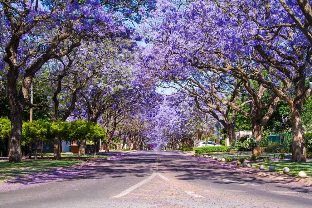 Streets in Pretoria