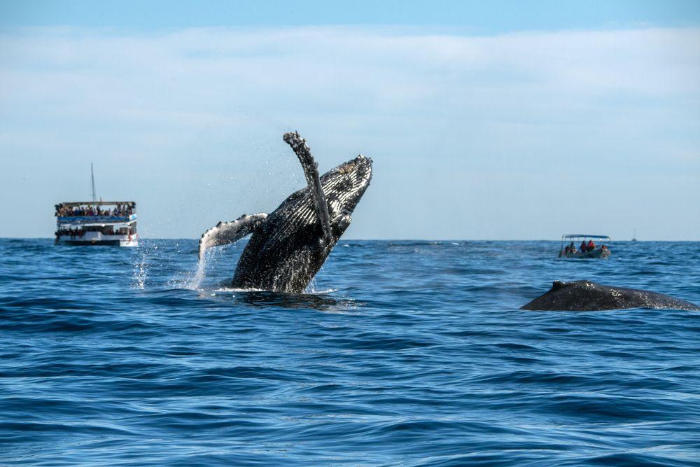 Whale Watching in Redondo Beach