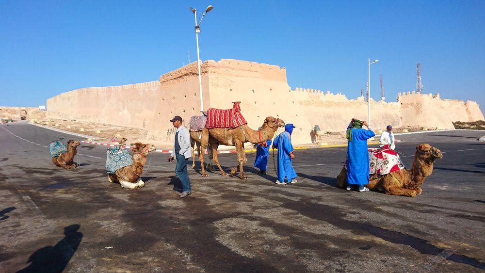 Camel ride in Casablanca