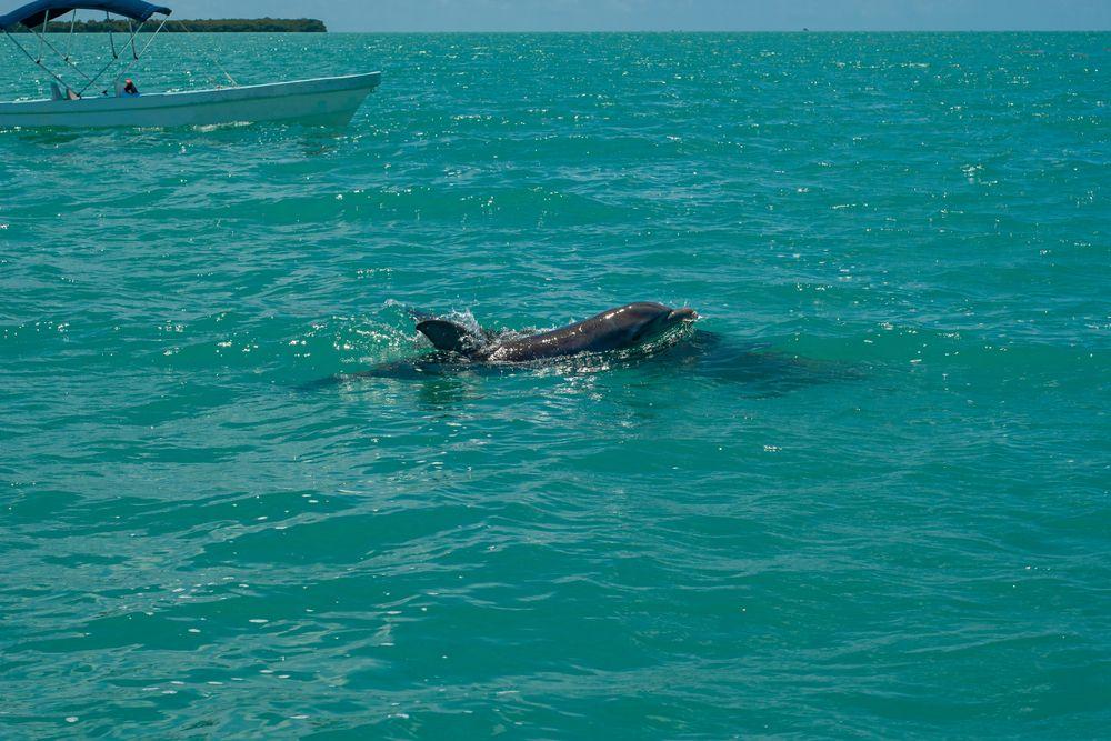 Dolphin at Tulum Akumal