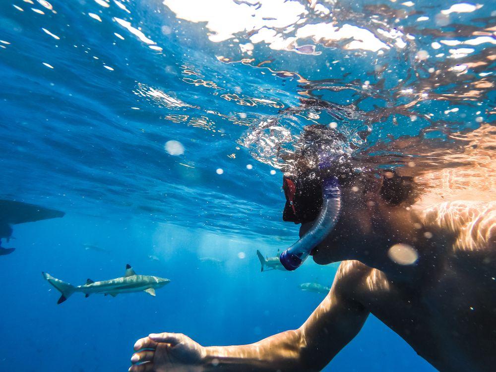 Shark Snorkeling in Bora bora