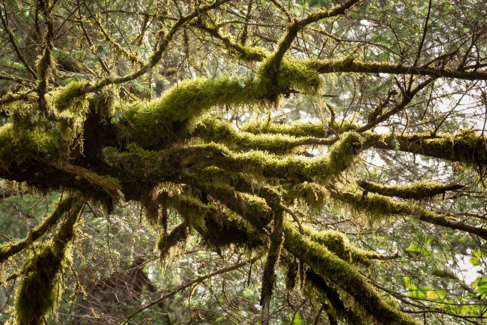 Spooky trees on Tonsina Point